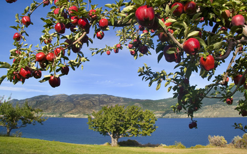 Gyümölcsök és fák a népi babonákban