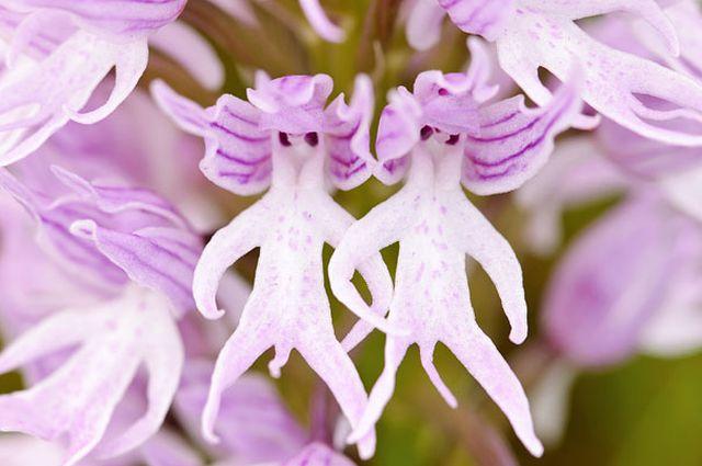 Virágok, amik egészen másra hasonlítanak - bámulatos fotók