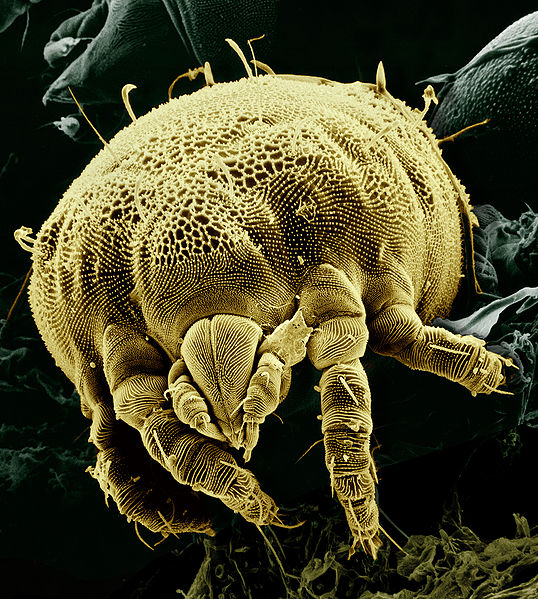Lenyűgöző képek a mikroszkóp alól