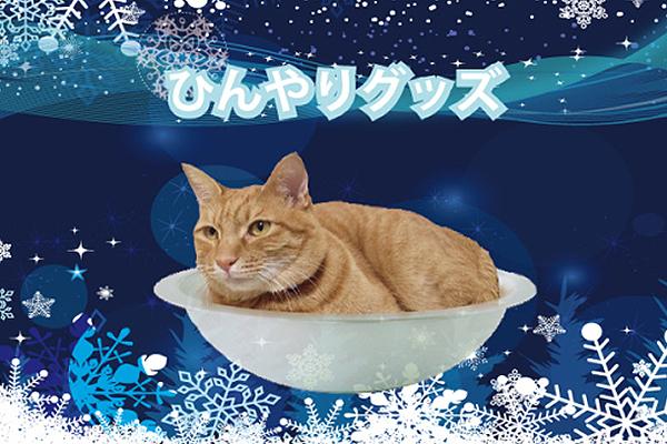 Itt a macskahűtő!