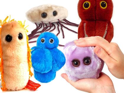 baktériumok a székletben
