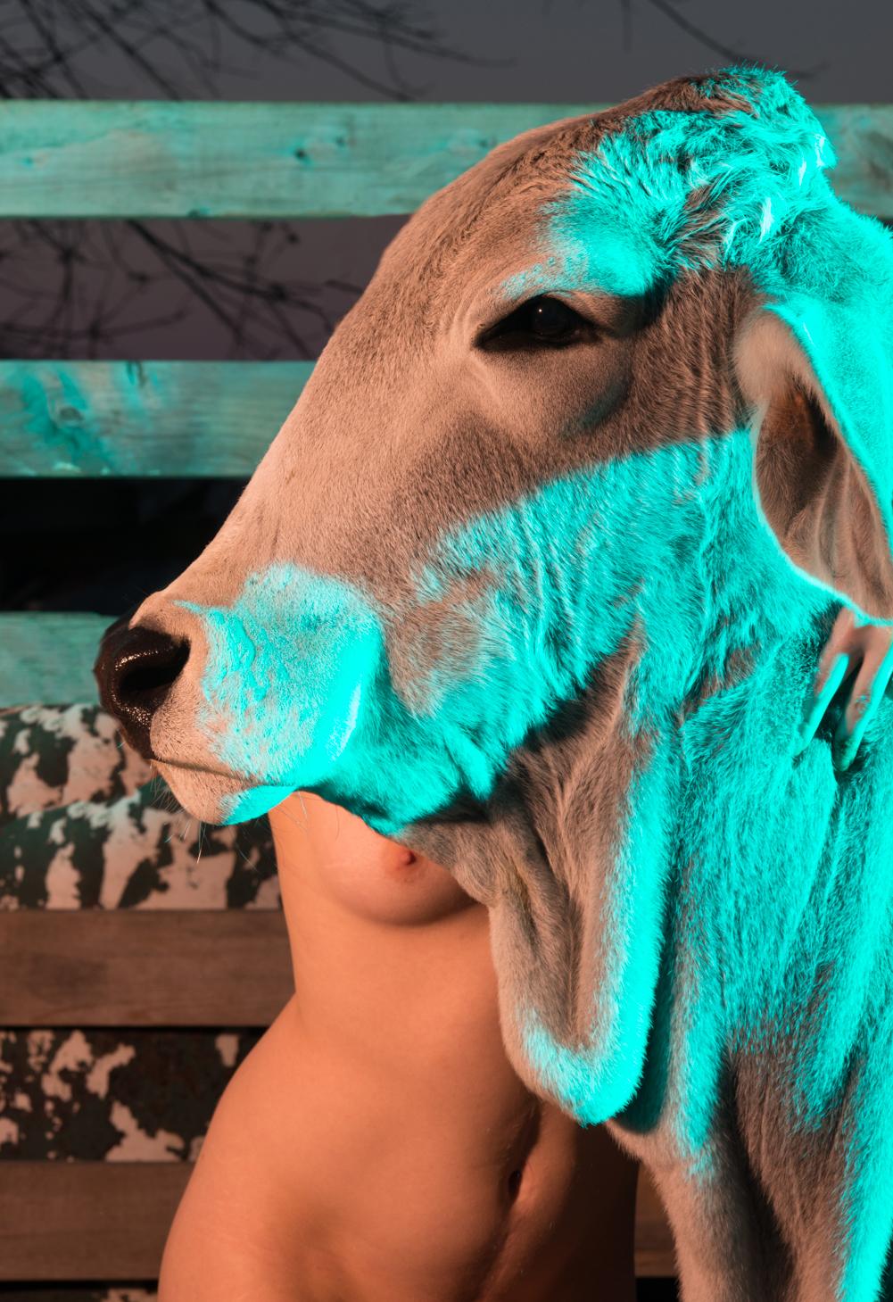 Provokatív: összehasonlította egy tehén és egy nő testét