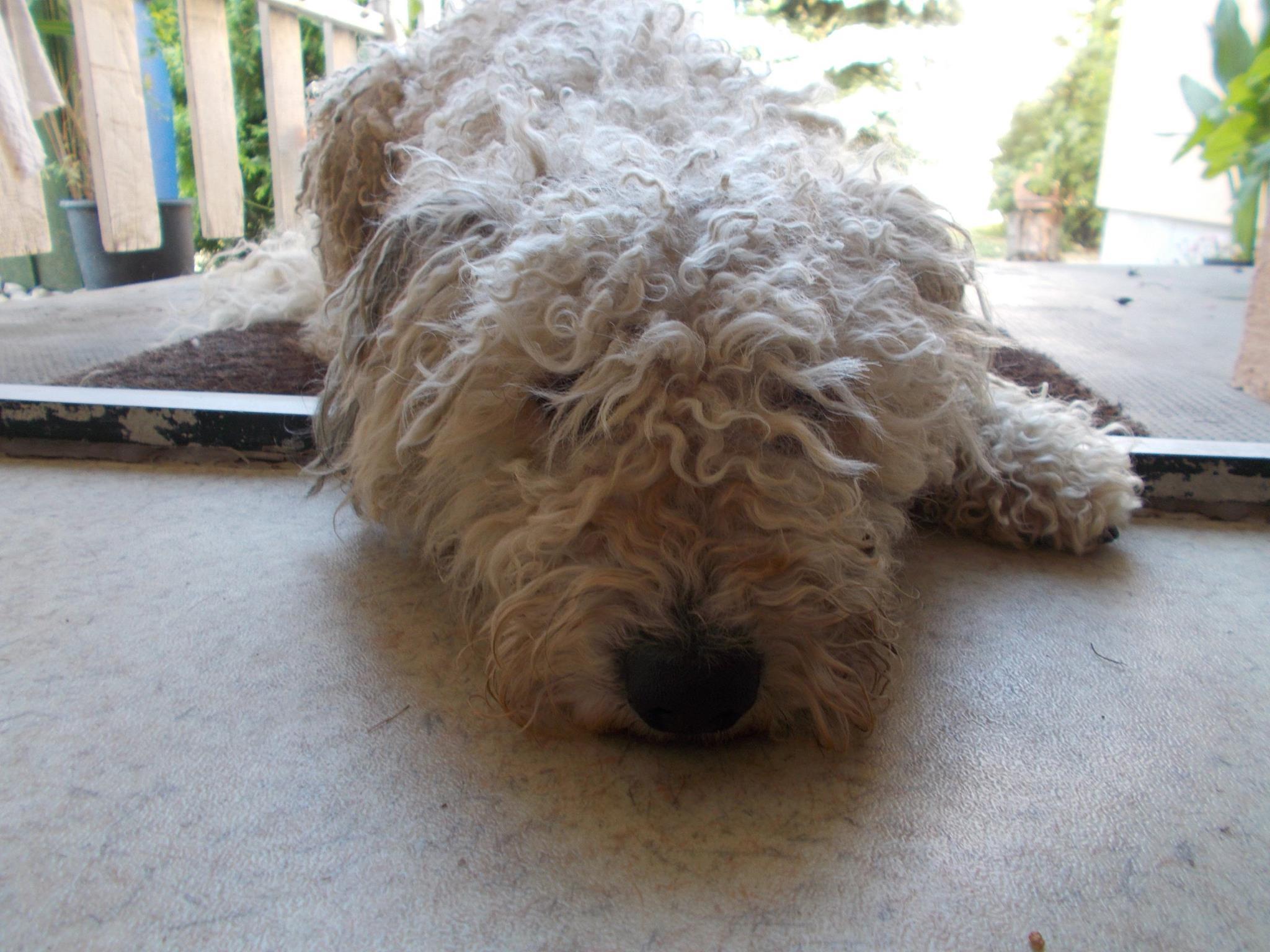 Pamacs, a menhelyi kutya második élete