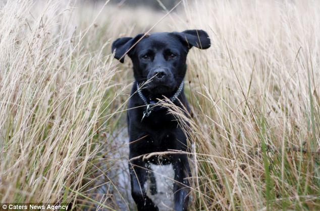 A kutya, aki allergiás a kutyalétre