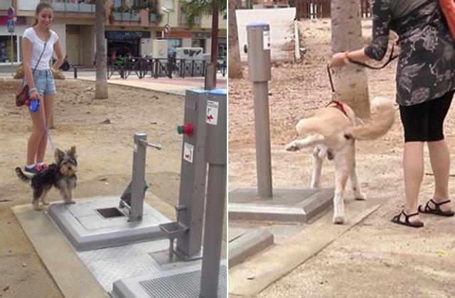 Nyilvános vécét készítettek kutyáknak