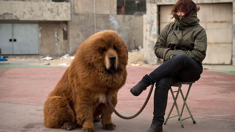 Fotó: dovga.com