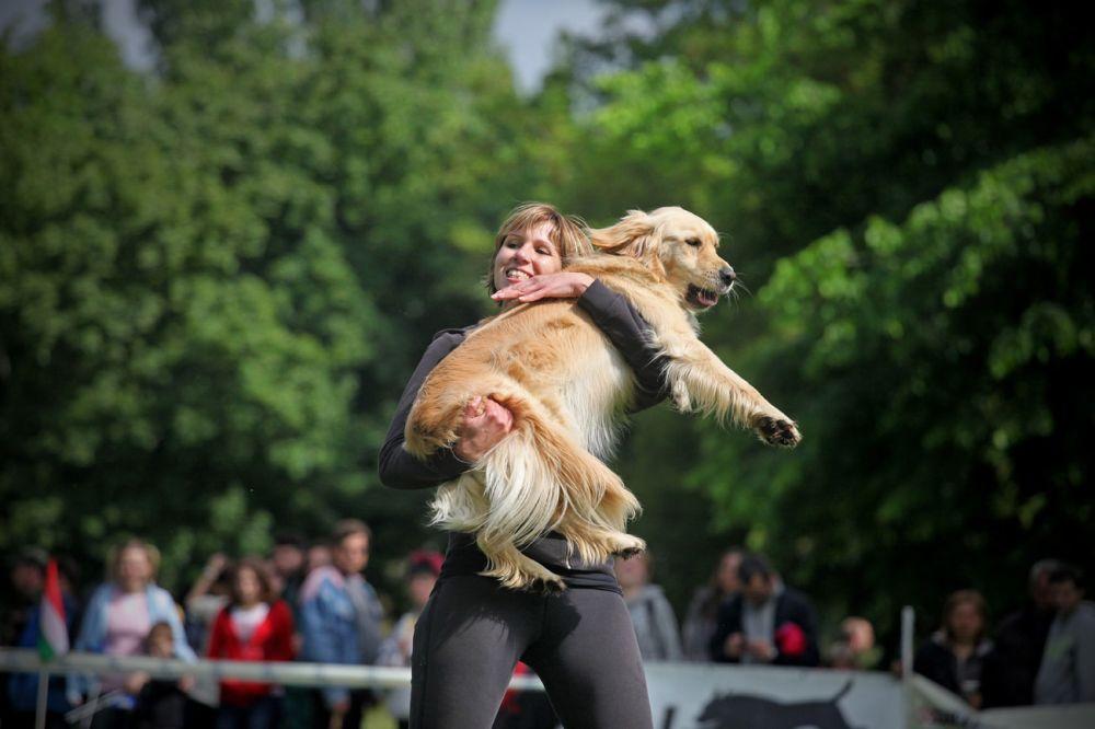 Városliget: Vége az önfeledt kutyasétáltatásnak