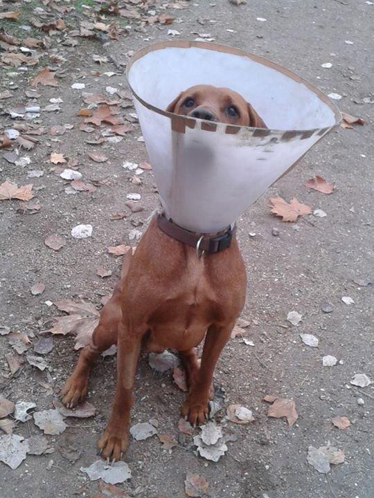 Kutyák és az ivartalanítás