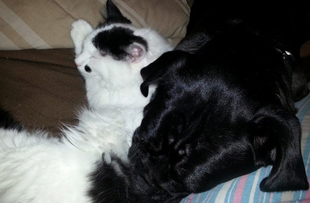 Egy kutya nevelt fel egy újszülött kiscicát - fotók