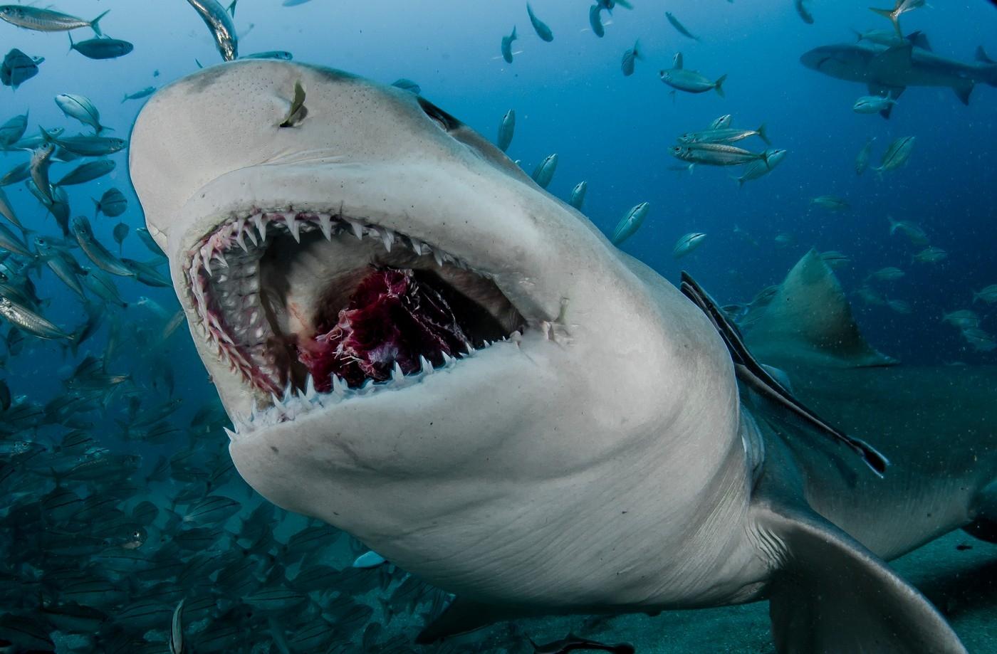 Így készül a cápás selfie