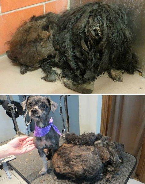 16 kutya megmentése képekben