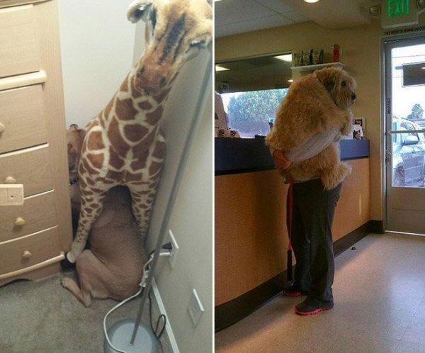Napi cuki: így félnek a kisállatok az állatorvosi váróban