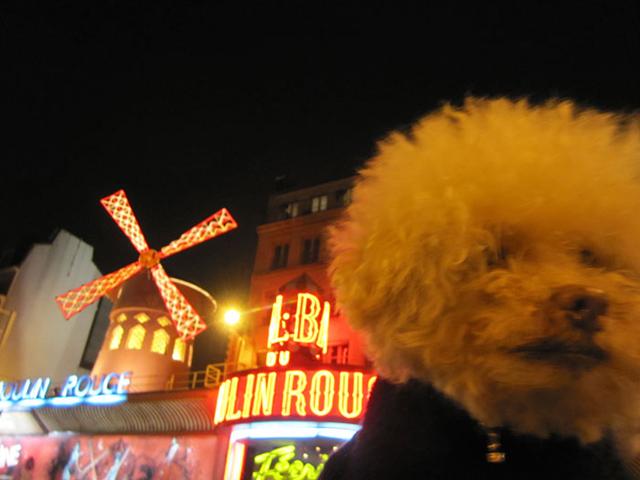 Ezzel a kutyával te is szívesen cserélnél - fotók