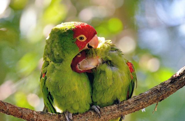 Ők az igazi szerelemmadarak - tündéri fotók