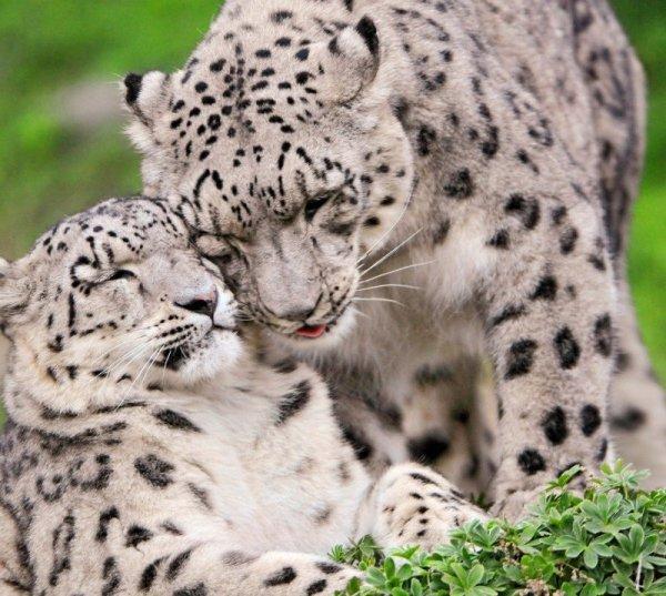 Kölykök és mamák - fotók az állatvilágból