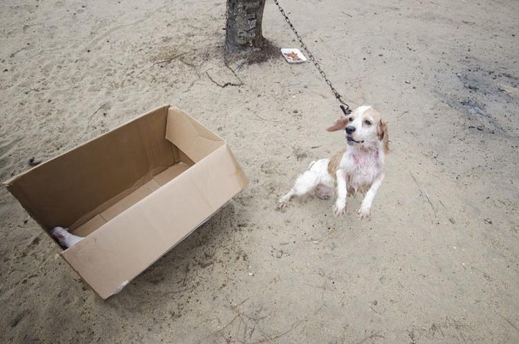 A kivert kutyák szigete - fotók