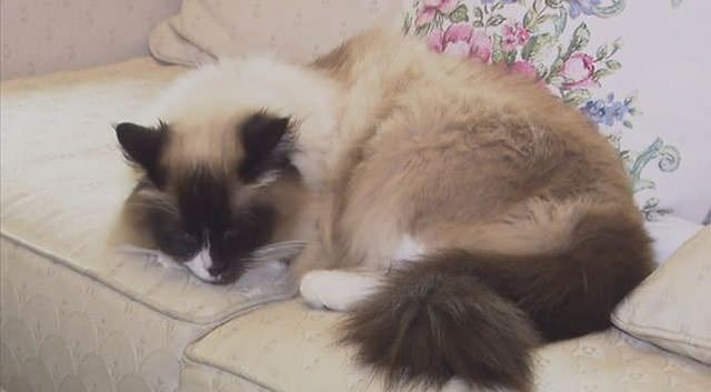 30 millió forintért vettek meg egy macskát