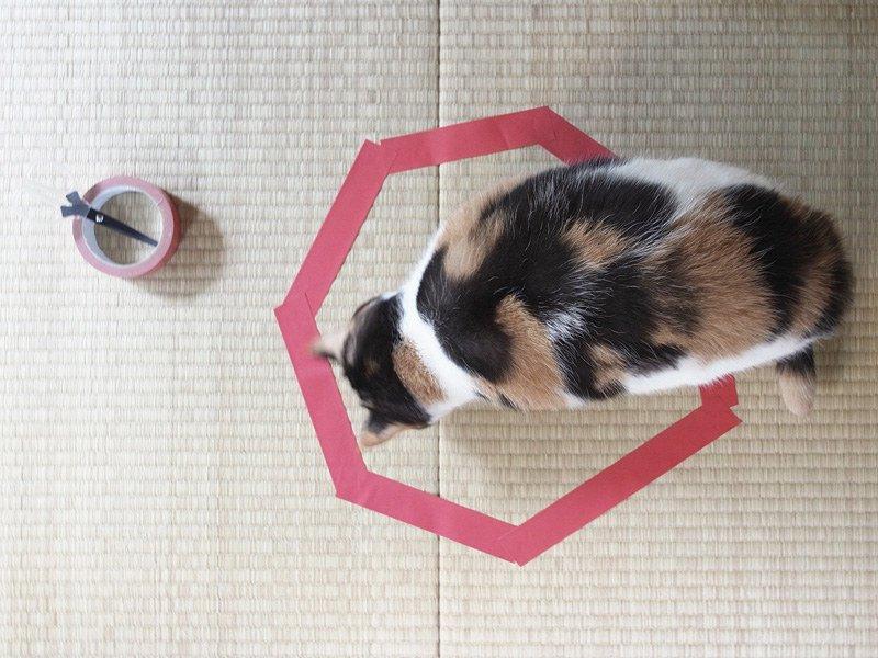 Hogyan ejtsd csapdába a macskádat? Mutatjuk lépésről lépésre.