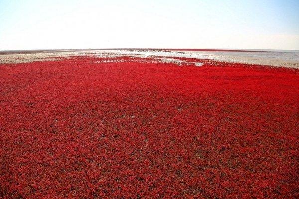 Vörös szőnyeg a tengeren