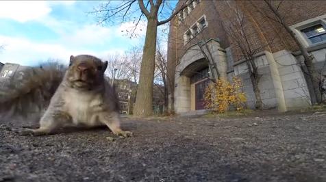 Egy kamerát ellopó mókus az internet új sztárja - cuki videóval