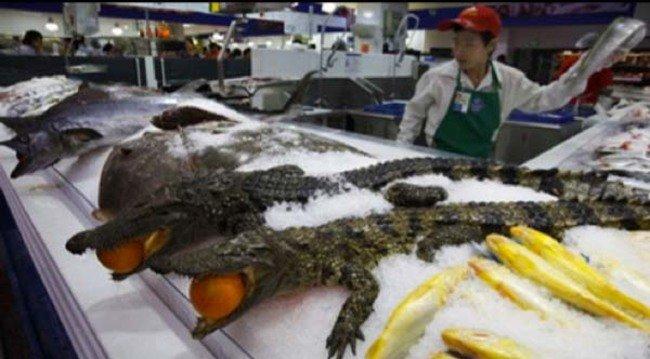 Kezdjük egy kis krokodil hússal a vásárt