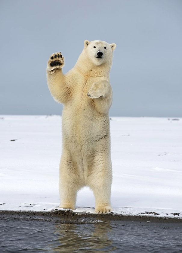 Mondjátok, hogy helló! - cuki integető állatos képek