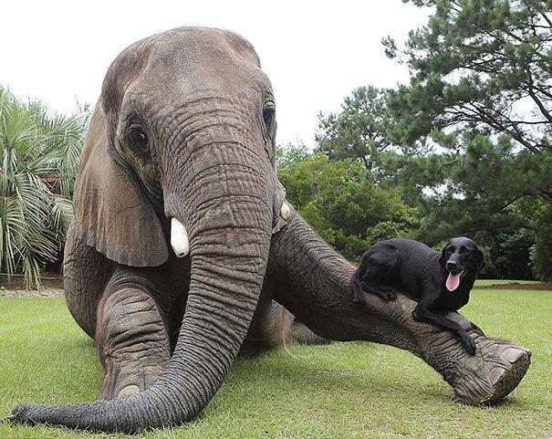 Állati barátságok