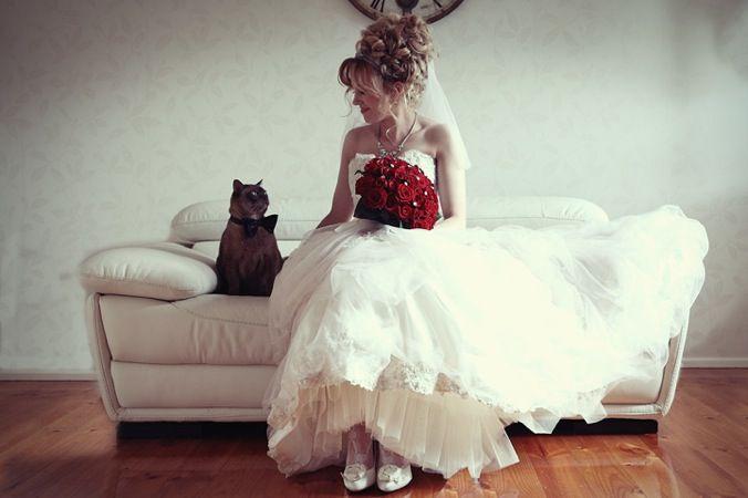 Házi kedvencek az esküvőn - cuki képek