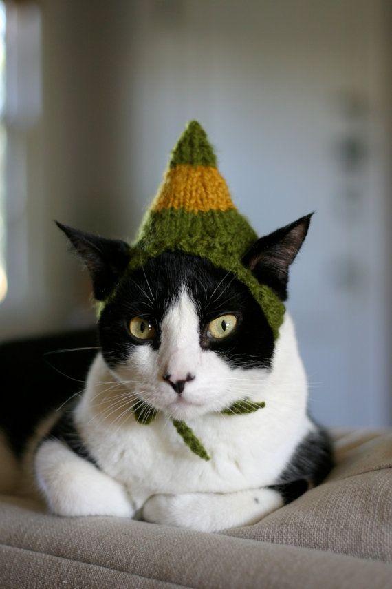 50 cuki állat, akiknél már dübörög a karácsony!  - vicces fotók