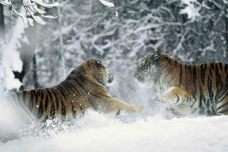 10 lenyűgöző fotó Oroszország havas tájairól
