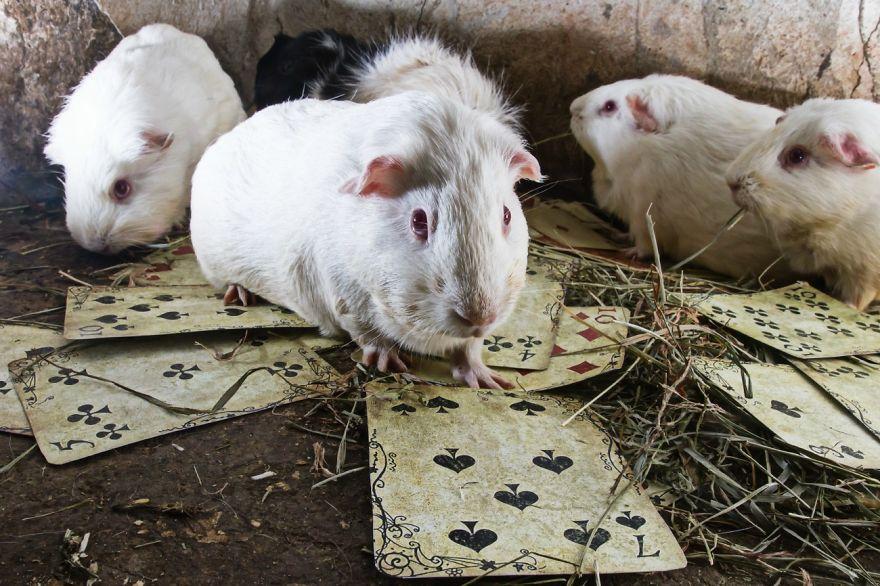 Szörnyű genetikai kísérletekektől megmentett állatokról készítettek fotósorozatot