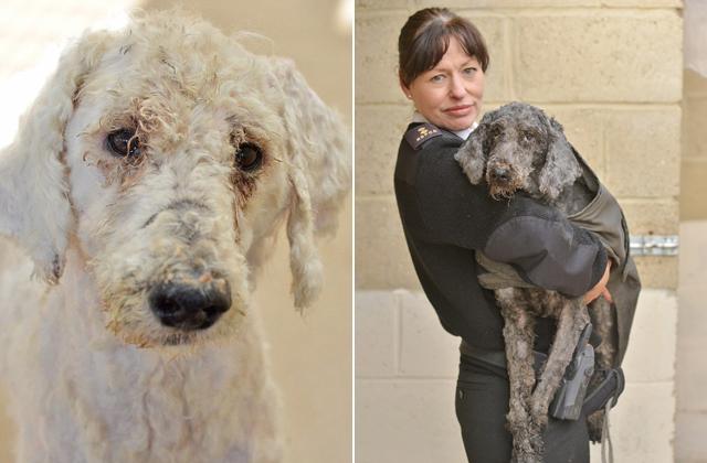 Lenyűgöző átváltozás: kiderült, milyen szépek a mentett kutyák