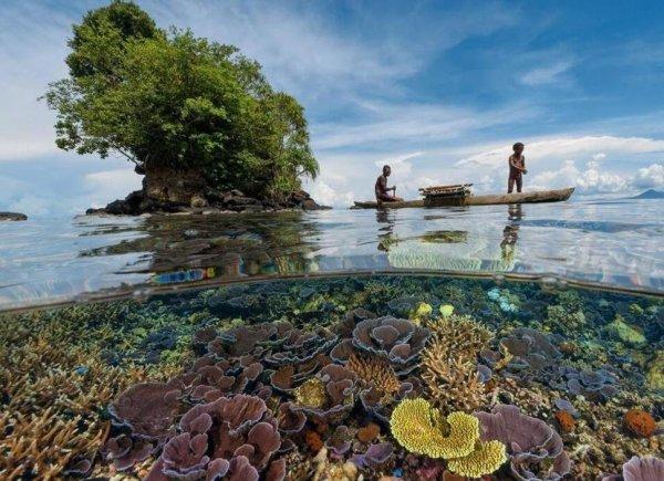Csodálatos víz alatti fotók
