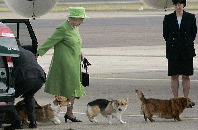 II. Erzsébet már nem akar több kutyát