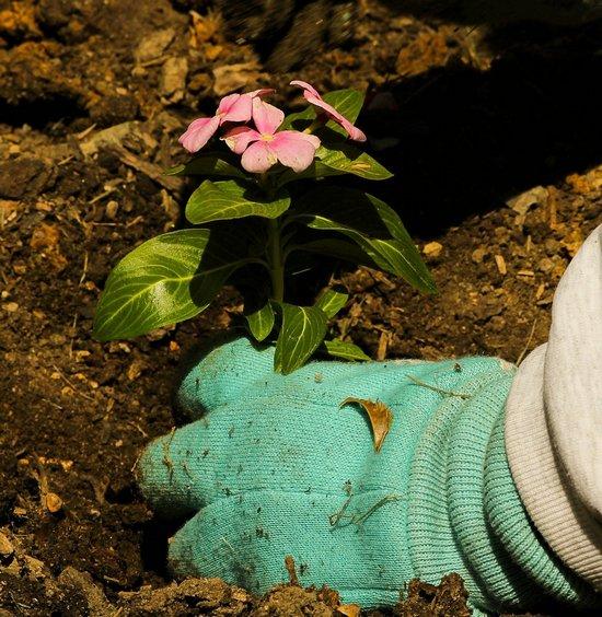A 10 legjobb tanács, ha most kezdesz kertészkedni