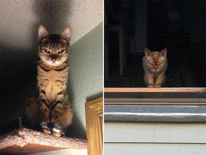 Macskák gyilkos zöld szemmel