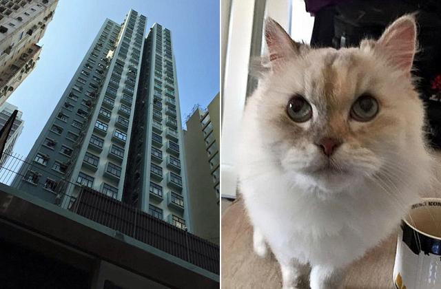 26 emeletet zuhant a macska, túlélte