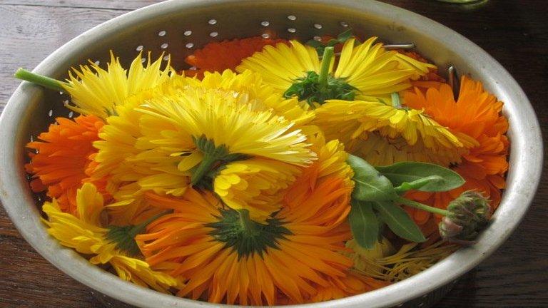Természetes lázcsillapító: körömvirág tea