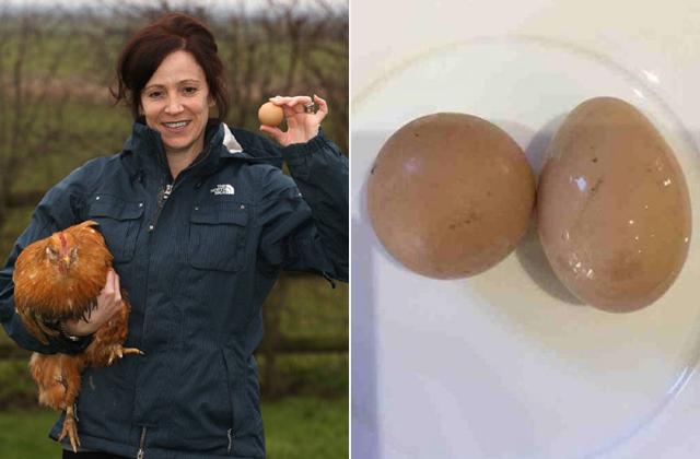 Gömb alakú tojást tojt egy tyúk