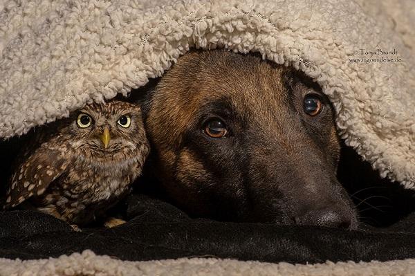 Bagoly és kutya: egy különleges barátság