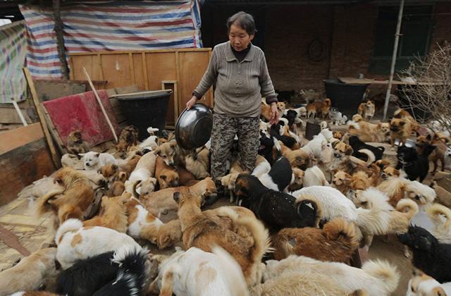 1300 kutyáról gondoskodik négy idős asszony