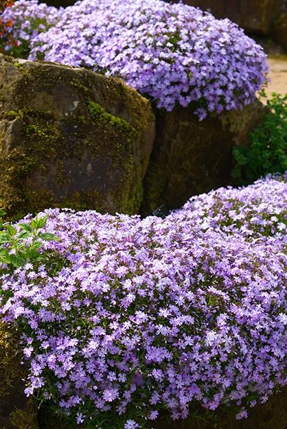 Gyönyörű kert - 3 csodálatos tavaszi virág