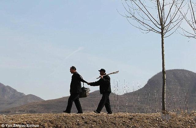 Tízezer fát ültett egy vak és egy amputált karú férfi