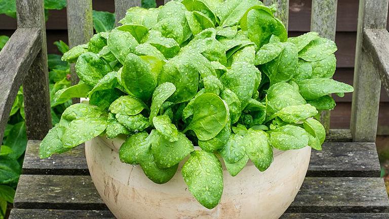 9 zöldség, amit a teraszon is könnyű nevelni
