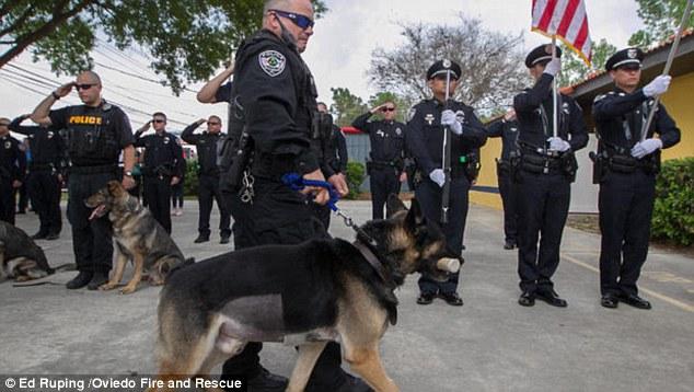 Megható búcsú: így köszöntek el a kiváló rendőrkutyától