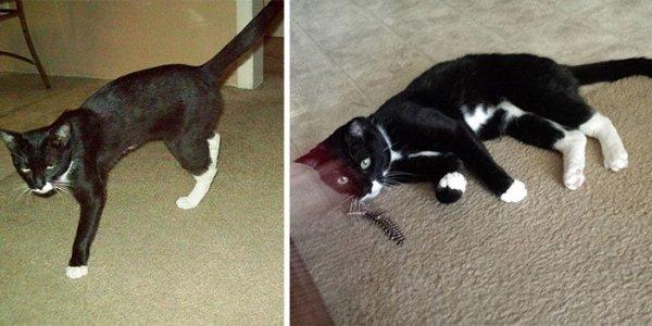 Cicák, akiket sikerült megmenteni