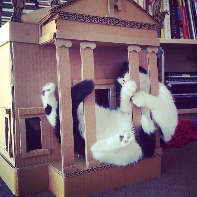 Macskák, akik betörtek a babaházaba - vicces fotók