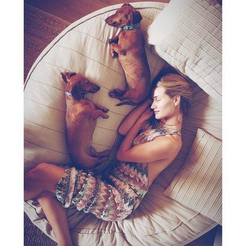 Őrült cukik - topmodellek stílusikon kutyái