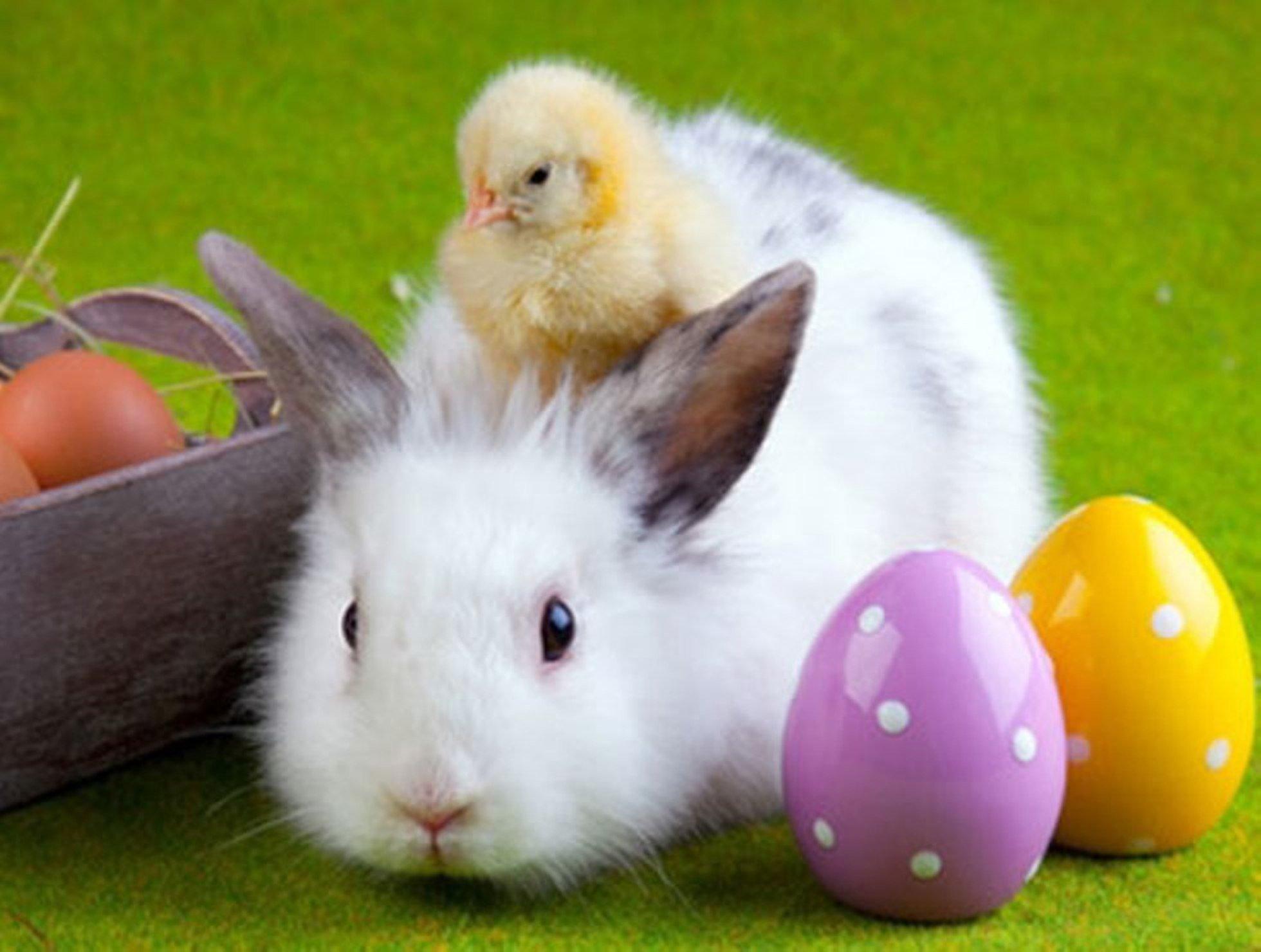 Ilyen a húsvét, ha ápolónő vagy