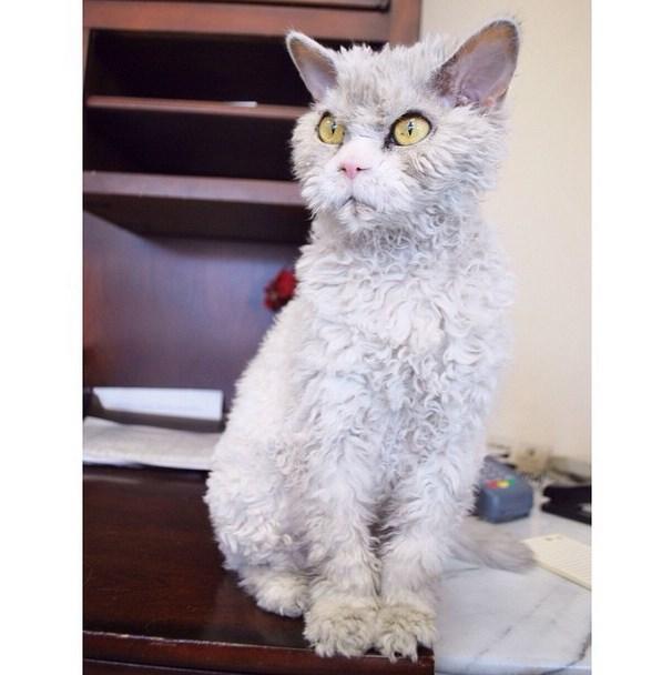 Albert, a morcos macska az internet új sztárja
